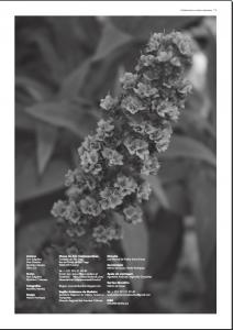 Catálogo Endemismo e Outras Naturezas.2png